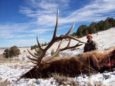 The Slick-Horn Bull Elk