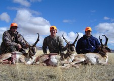 A good picture of three very nice antelope bucks.