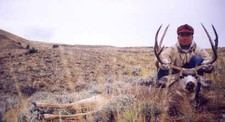 Trophy Mule deer taken by a member of the Atkins party during their fall 1998 hunt.